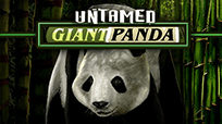 Игровой автомат Untamed Giant Panda
